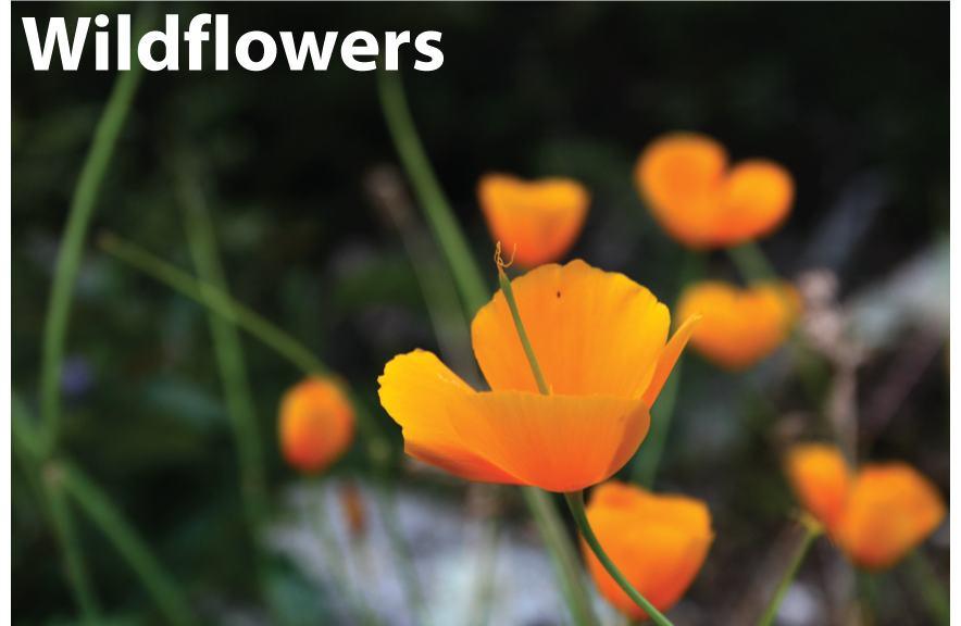wildflowers Portfolio